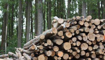 Biomasse_Holz