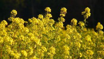 Pflanzen_Biomasse
